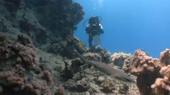 Fascinating dives with reef sharks. Diving in the Red sea near Egypt. Stock Footage