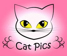 Cat Pics Indicating Picture Kitty And Feline Stock Illustration