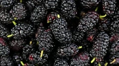 Mulberry close up. Front of the camera rotates plate with mulberry - stock footage