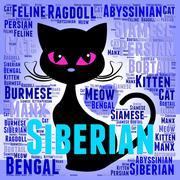 Siberian Cat Representing Breeding Puss And Breed - stock illustration
