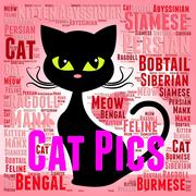 Cat Pics Meaning Photo Puss And Image Stock Illustration
