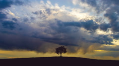 The tree stand against the background of sunset. Time lapse. Wide angle Stock Footage