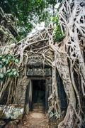 Tree growing over ruins at Angkor Wat, Siem Reap, Cambodia Stock Photos