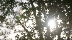 Early morning sun comes up through trees at sunrise Stock Footage