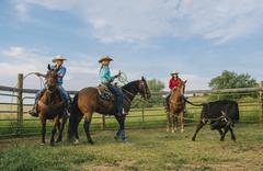 Cowgirls on horseback lassoing cattle on ranch Stock Photos