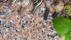 Snails on wet sidewalk Stock Footage