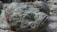 Very poisonous stone fish. Diving in the Red sea near Egypt. - stock footage