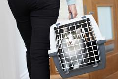 Woman Taking Pet Cat To Vet In Carrier - stock photo