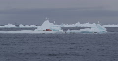 Iceberg floating by with narwhal carcass in medium Stock Footage