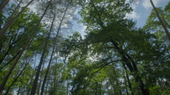 The walk along the tree in the forest. Real time capture. Wide angle Stock Footage