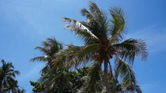 Top of coconut tree on bright sky background - stock footage