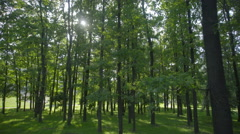 The walk along the tree in the grove. Real time capture. Wide angle Stock Footage