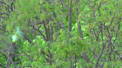 Parakeet in a tree flying away - Slow motion Stock Footage