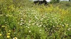 Wind rustles wildflowers Stock Footage