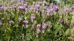 Wind rustles wildflowers, close-up Stock Footage