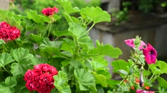 Rare drops of rain falling on the flowers and leaves - stock footage