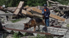 Rescue Dogs With Dog Handlers Search To Rescue Earthquake Victims at training - stock footage