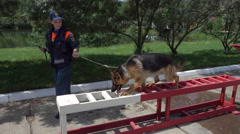 Search And Rescue Dog Training - stock footage