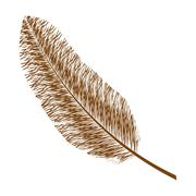 Feather design. isolated  bohemic plume, vector graphic - stock illustration