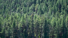 Alaska Inside Passage Forest Close up Stock Footage