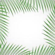 Palm tree leaves Stock Illustration