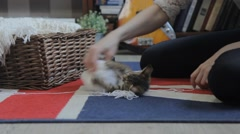 Girl plays with a kitten with balls of thread,dolly Stock Footage