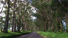 Tree covered road on Kauai that leads into Koloa town Stock Footage