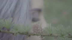 Closeup of beautiful woman in purple hair in coniferous forest. - stock footage