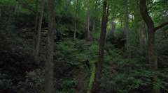 Aerial Thru Trees in Red River Gorge, Daniel Boone Forrest, Appalachia Stock Footage