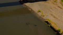 Costa Rica Aerial over crocodiles Stock Footage