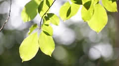 Blur  italy  leaf in the    wind Stock Footage