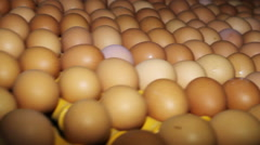 Poultry. Yellow chicken eggs on the conveyor. Stock Footage