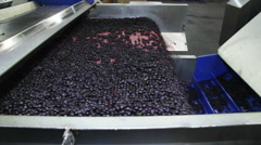 processing of berries cranberries at the factory - stock footage