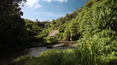 Beautiful river in lush forest in Ubud, Bali Stock Footage
