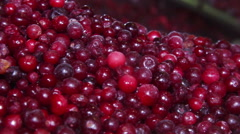 Frozen red cranberries - stock footage