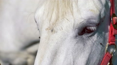 A white horse standing in front of camera and looks around. Stock Footage