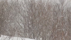 Trees and shrubs in a snowstorm. Stock Footage