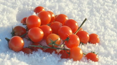 Small bright scarlet tomatoes lie on the snow. Stock Footage