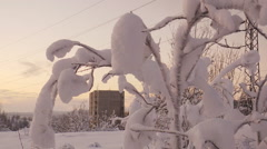 Snow-covered branches of a tree swaying on the background houses. Stock Footage
