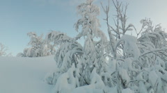 Snow-covered bushes and small trees among the snow drifts. Stock Footage