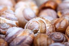 bunch of spiral snails shells. selective focus. abstract macro photo - stock photo