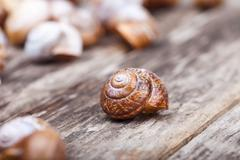 Abstract photo of a spiral snail on wooden surface Stock Photos
