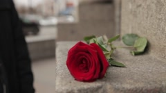 The hand of men take a rose lying on the stone steps Stock Footage