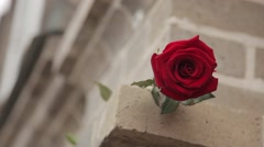 Hand man picks up a red rose from the ledge stone house Stock Footage