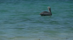 Pelican Diving Close Up Stock Footage