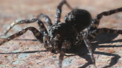 Brown Spider Moves its Legs Stock Footage