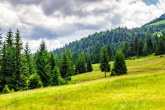 coniferous forest on a  mountain hill side - stock photo