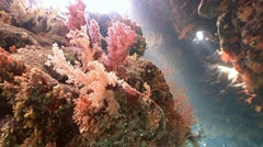 Immersion in the caves of the reef St. Johns. - stock footage