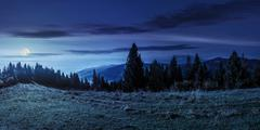 Spruce forest on hillside at night Stock Photos