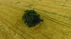 Aerial view of cornfields - stock footage